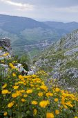 picture of mountain lion  - Mountain town with yellow flowers in the foreground - JPG