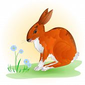 foto of hare  - Cheerful spring bunny Hare with blue flowers vector illustration - JPG