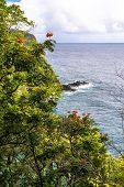 picture of vegetation  - View of the vegetation on the Maui coast - JPG
