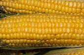 pic of maize  - Corn or maize is on sale at the Bazaar - JPG