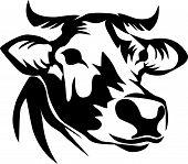foto of cow head  - head of horned cow  - JPG