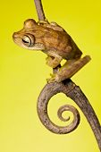 Tree Frog On Twig In Background Copyspace