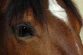 Brown Horse Eye Close-Up