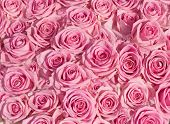 foto of pink rose  - big bunch of multiple pink roses of a bride on a wedding from top - JPG