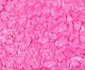 pink rose petals everywhere