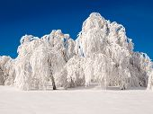 Snowy Forest.