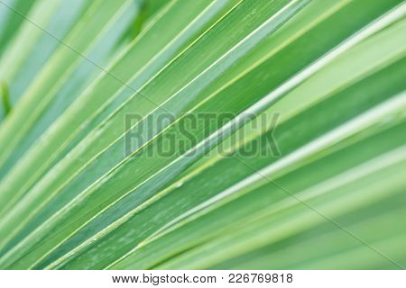 Blurred Abstract Botanical Background Palm