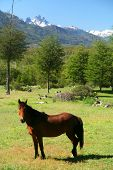 Horse in Patagonia