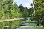 stock photo of bayou  - This is a picture of a Louisiana Bayou - JPG