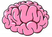 Illustration Human Brain In Profile