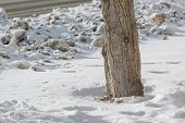 A Tree In Dirty Snow. Dirty Snow By The Road. Tree Near The Road In Winter. A Tree In The Snow. poster