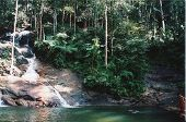 foto of skinny-dip  - templer park malaysia south east asia river lake skinny dipping swimming nature jungle - JPG