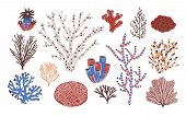 Collection Of Various Corals And Seaweed Or Algae Isolated On White Background. Beautiful Underwater poster
