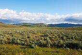pic of lamar  - Lamar Valley in Yellowstone National Park Wyoming - JPG