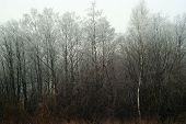 Snowless Winter Grove, Overgrown With Bushes, In Cloudy Foggy Weather poster