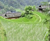 Rice Terrace Village