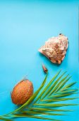 Tropical Paradise Concept: Big Tropical Sea Shell On A Turquoise Background With A Palm Tree Leaf. N poster