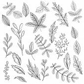 Vintage Vector Floral Set Of Isolated Elements In Victorian Style, Leaves Ofplants And Trees, Imitat poster
