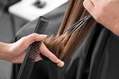 Professional stylist cutting womans hair in salon, closeup poster