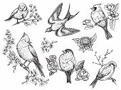 Bird Hand Drawn Set In Vintage Style With Flowers. Spring Birds Sitting On Blossom Branches. Linear  poster