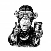 Monkey Dressed In A Cassock And Banana Chain. Priest Holding Book Darwin The Theory Of Evolution And poster
