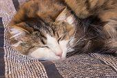 Detail Of Tabby Cat Sleeping On Blue Duvet Cover poster