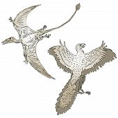 image of pterodactyl  - Vector illustration of a pterodactyl and ancient birds - JPG