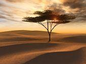 Golden Desert Dunes Single Tree