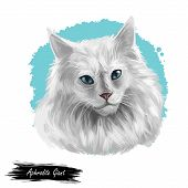 Domestic Breed Aphrodite Giant Cat Isolated On White Background. Digital Art Illustration Of Hand Dr poster