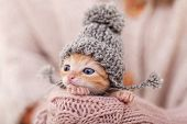 Cute ginger kitten with warm woolen hat prepared for winter. Woman hands holding and protecting ador poster