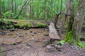 Hiking In The Great Smoky Mountains. Log Footbridge Over A Clear Fresh Mountain Stream On A Hiking T poster