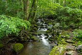 Smoky Mountain Stream. Smoky Mountain Stream Rushes Through The Lush Forest Of The Great Smoky Mount poster
