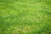 Closeup Of Fresh Bright Green Grass On The Lawn poster