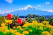 Mt Diamond Fuji With Snow And Flower Garden Along The Lake Walkway At Kawaguchiko Lake In Japan, Mt  poster