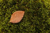 Moss Green Texture. Moss Background. Green Moss With Leaves poster