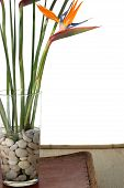 picture of flower arrangement  - bird of paradise flowers on white background sitting on a asian tray - JPG