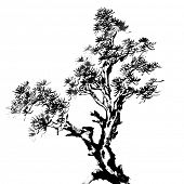 Chinese traditional ink painting, pine tree on white background.