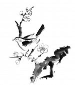 Chinese painting , plum blossom and bird, on white background.