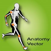 Vector concept or conceptual white and black man anatomy with pain illustration on green background