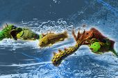 Fish And Sea Illustration