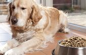Dog With His Food