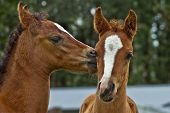 Affectionate Foals