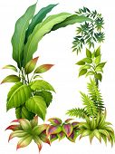 Illustration of leafy plants on a white background