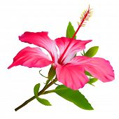 Flower Hibiscus. Hawaiian aloha tropical plant