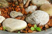 picture of coir  - Stone and coconut Coir under tree plant - JPG