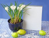 White Crocuses And Easters Eggs