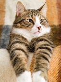 Domestic Cat poster