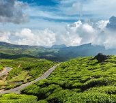 Kerala India travel background - road in green tea plantations in mountains in Munnar, Kerala, India