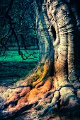 Massive Hollow Tree