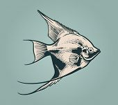 Vector vintage illustration of fish